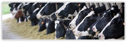 Von Loessl Immobilien - Landwirtschaftliche Betriebe